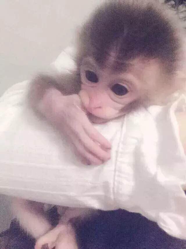 动物猴子果盘的做法